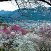 Civilization's Plum Blossoms | Japan