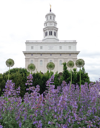 Bloom Where You're Planted || Nauvoo, IL