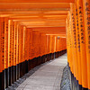 Life's Tunnel   Kyoto, Japan