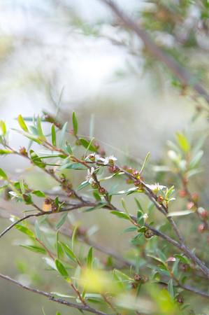 Aussie Sprout | Australia