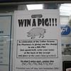 png Mt  Hagen pig poster