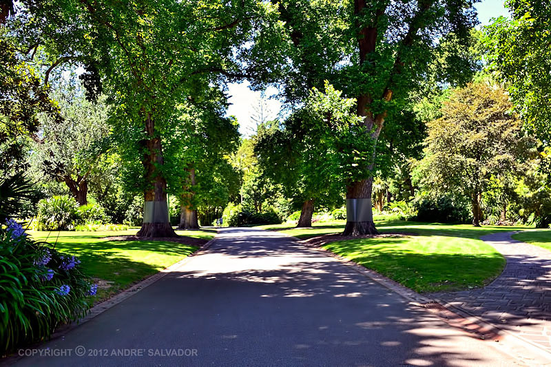 An avenue of trees at the Fitzroy gardens.