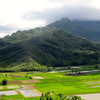 Well, as it's been all week it was another great day in Kauai today... there's a quick look at the Hanalei Taro fields on Kauai's North-shore before we head back to the pool at our condo for a cool-down dip! :-) Talk to you soon from Kona.