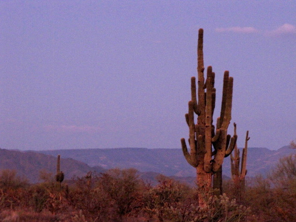 Another thing that's pretty amazing besides the sunsets in Phoenix are the Cactus... some of them are huge! :-)