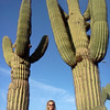 Check out these Cactus in Phoenix.. a bit bigger then the coffee table versions!! :-)