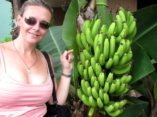 "There's N checking out some ""fresh"" bananas in Kona, Hawaii. :-)"