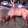 As we entered the restaurant for an amazing dinner, this huge guy was greeting us with his mega-big antlers... we saw lots of cool wildlife at the park so that was a nice treat!<br /> Overall, we had a great time visiting the Grand Canyon & Sedona, Arizona.