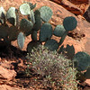 Watch your legs when on the trail... there are lots of Cactus plants!