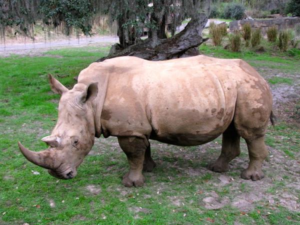 ...rhinos...
