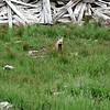 near Placer Gulch trail