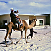 Birthday Party Camel Rides<br /> Dubai-1966