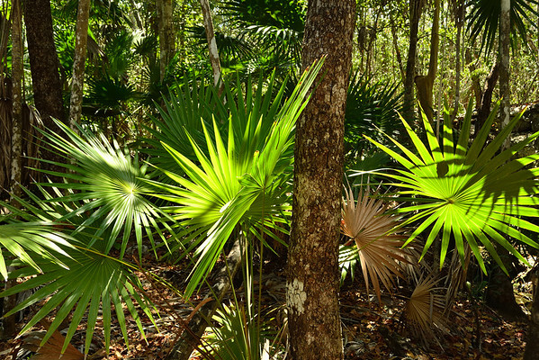 Mexico, Tulum, Jungle