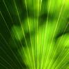 Mexico, Tulum, Palm Leaf