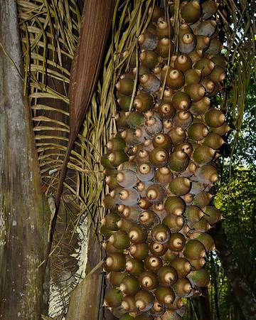 Mexico, Campeche, Paraiso Turistico