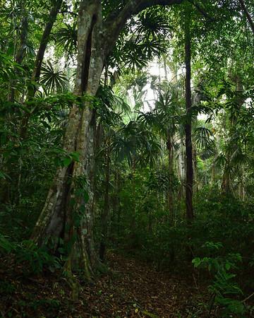Mexico, Jungle at Tres Lagunas