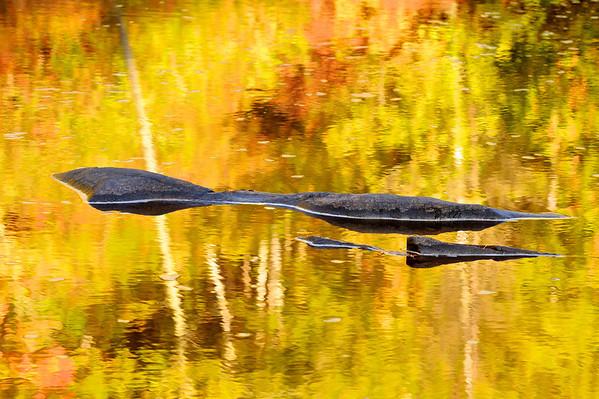 Reflection, Black River, UP