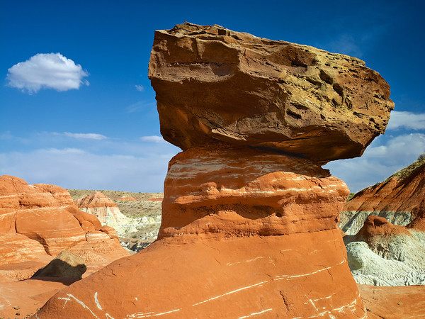 Lion, Vermilion Cliffs, UT