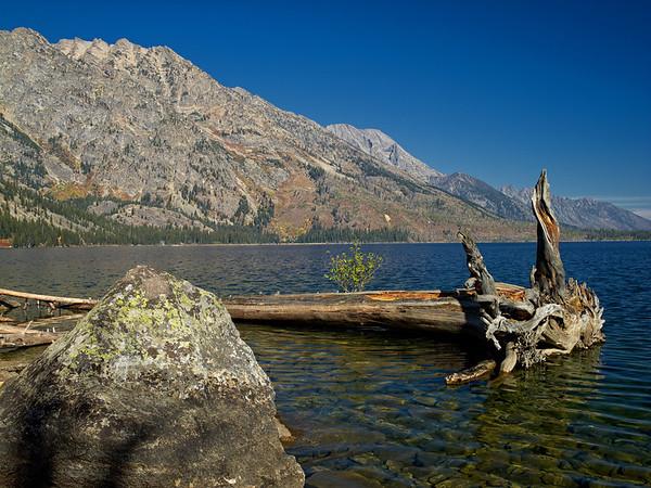 Floating Tree, Grand Teton, WY