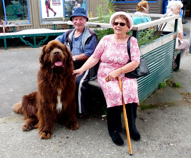 This dog on the main street of  Reefton may be the biggest I have ever seen.