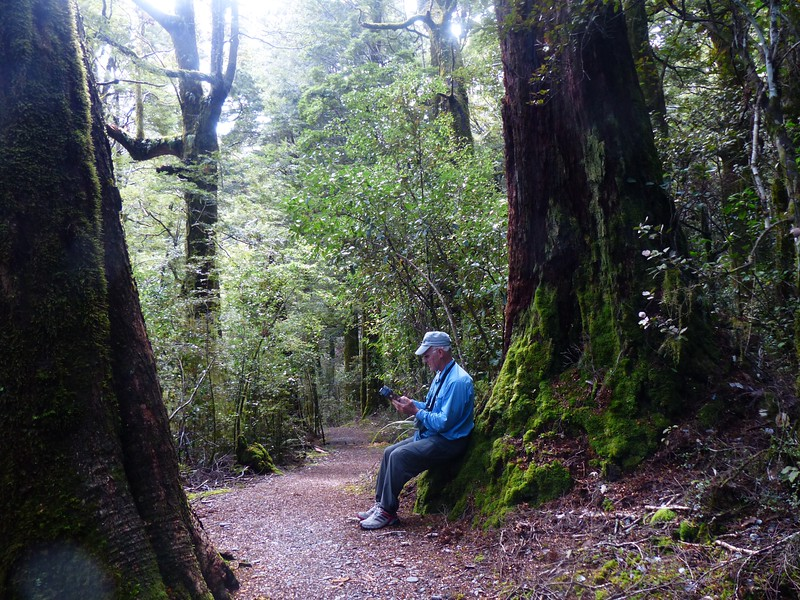 Haast Highway - Cameron Lookout Hike  - checking the guidebook.