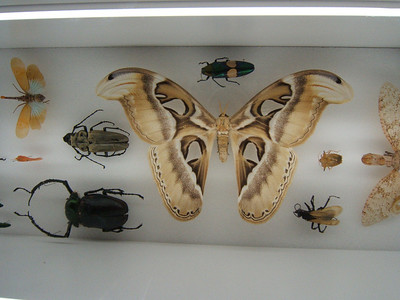 Insect display in the ROM