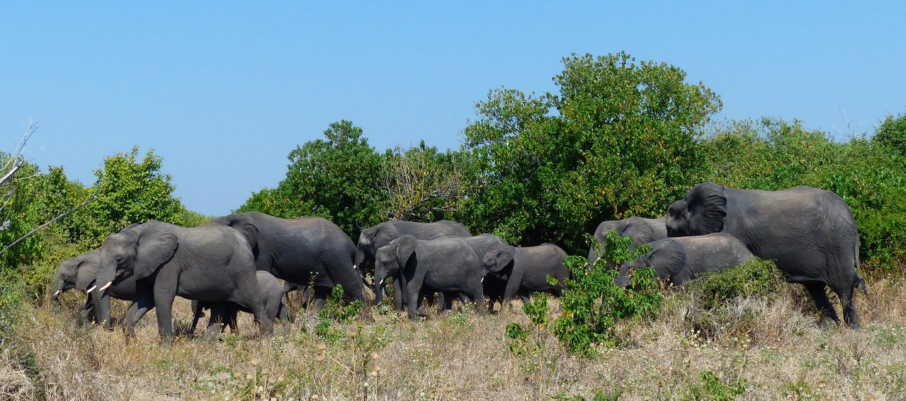 Lots of Elephants.