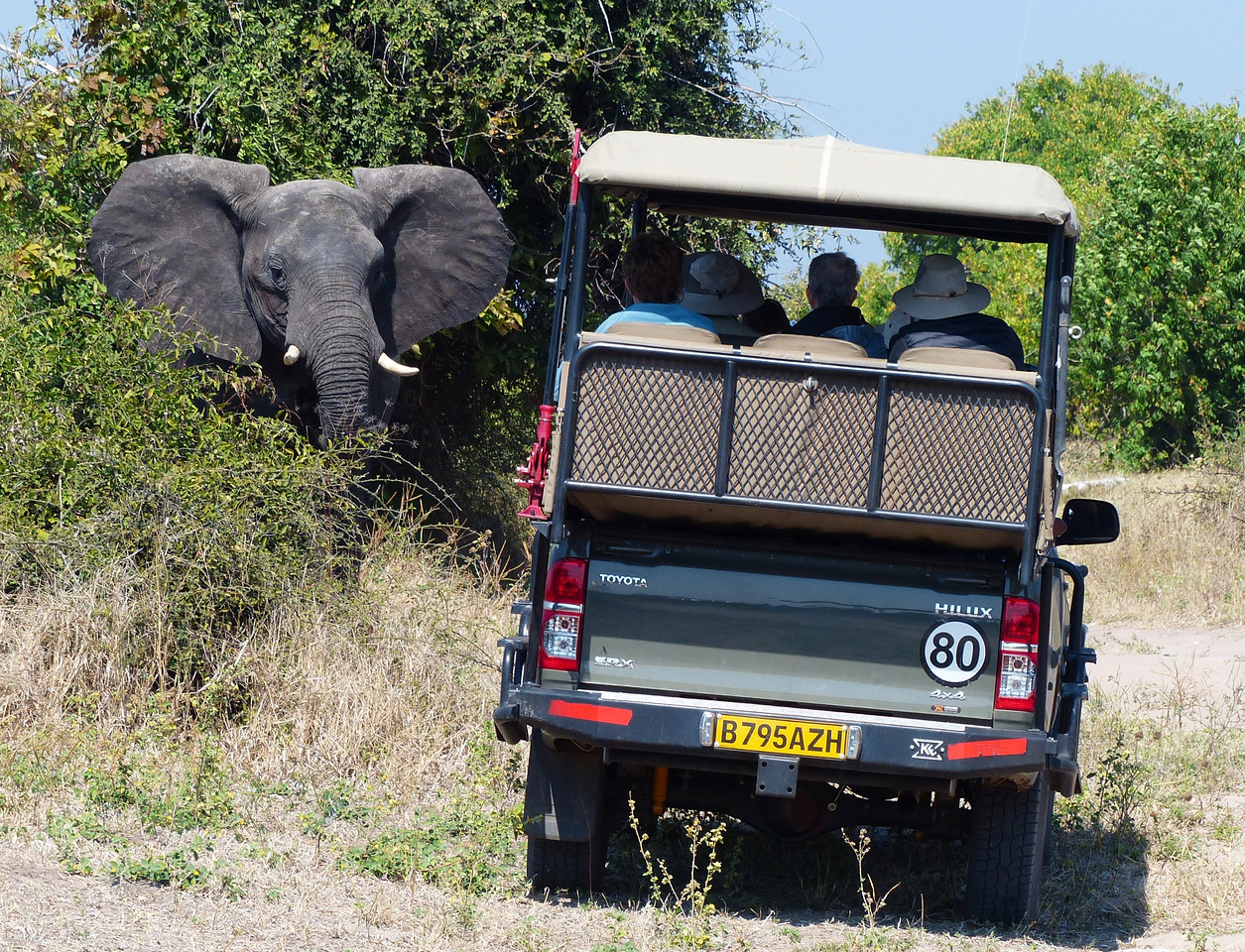 Typical Game Drive.
