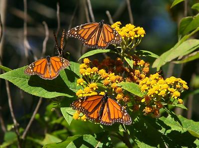 El Rosario Butterfly Reserve