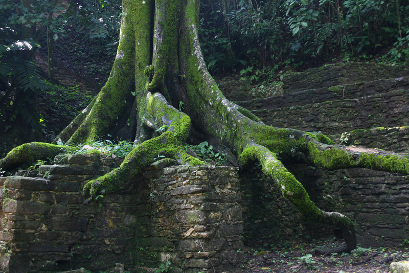 Huge trees show the passage of time.