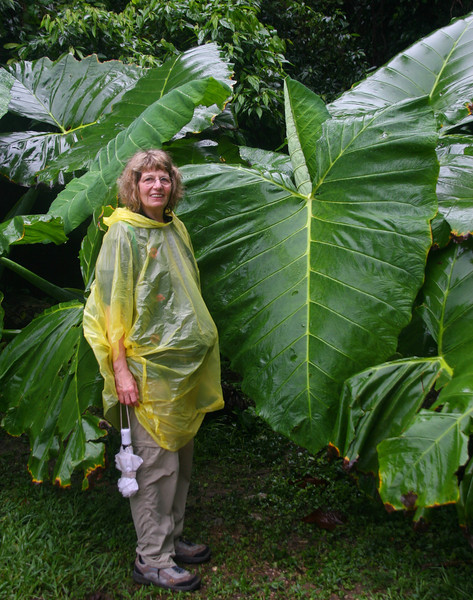 "Rena models her ""hi-tech"" raingear next to some huge jungle plants."