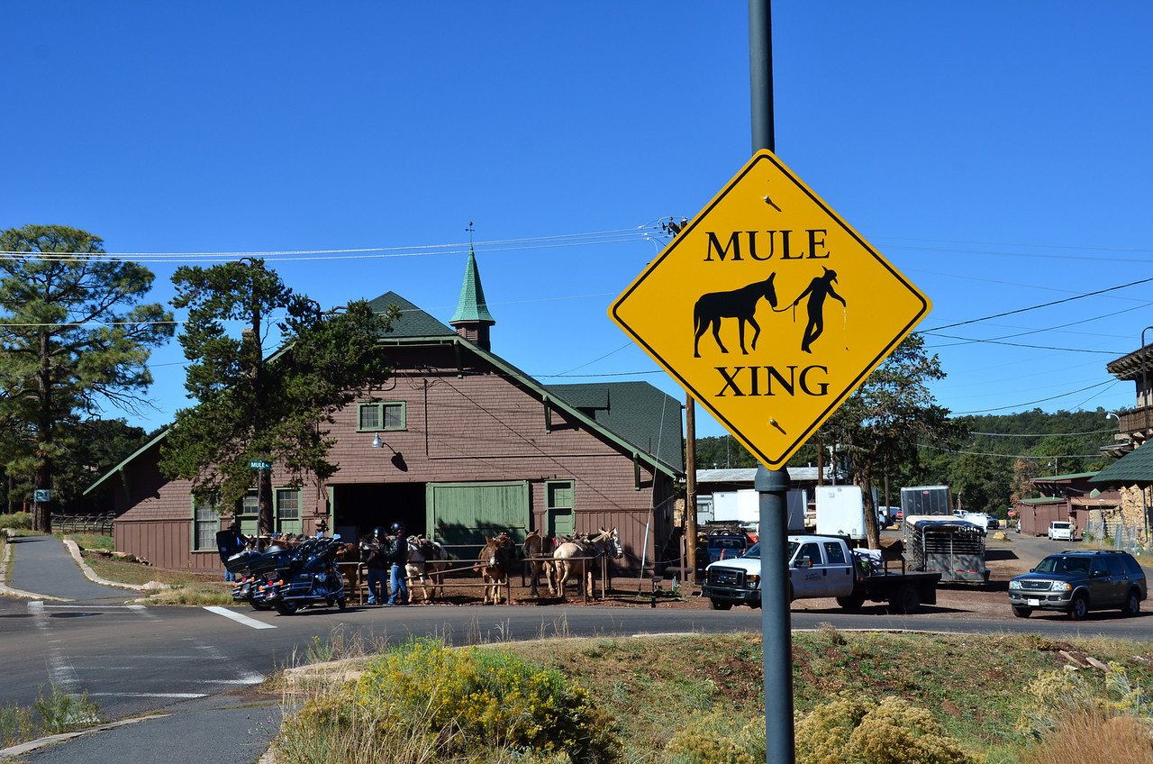 Mule Stables