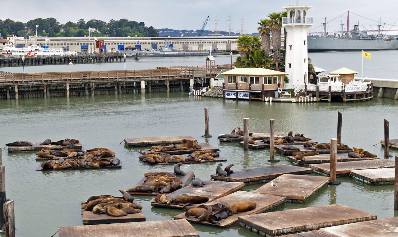 Seal Hangout Pier 39