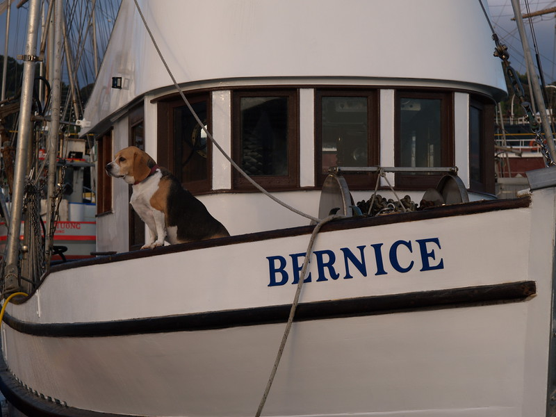 A Beagle and her Boat