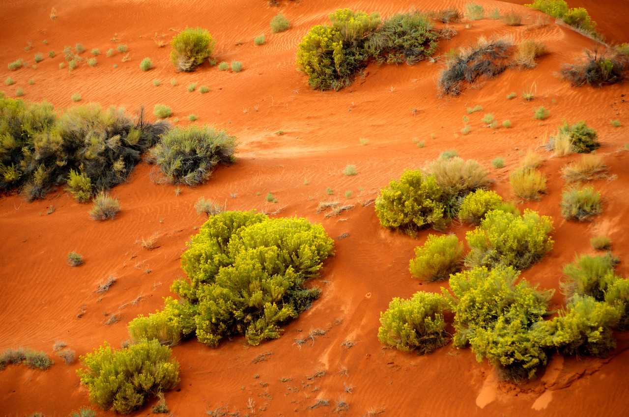 Yellow Flowers on Dune