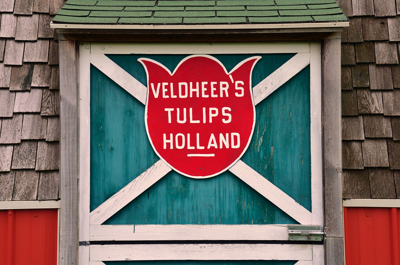 In 1950 Vern Veldheer started a hobby farm with 100 red tulips and 300 white tulips, today Veldheers plants over five million tulips for you to walk through and enjoy.
