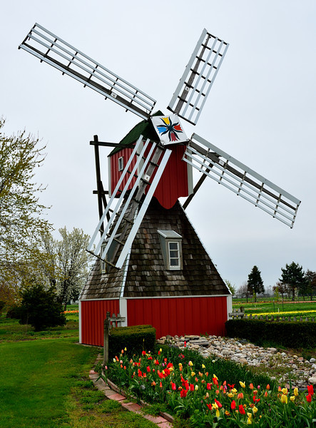 Windmill at Veldheer's tulip farm