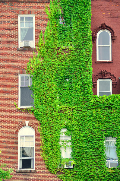 Ivy growing up the side of buildings on the south end of the Park Club parking lot