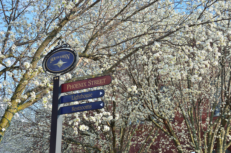 Spring flowering trees in full bloom in downtown South Haven