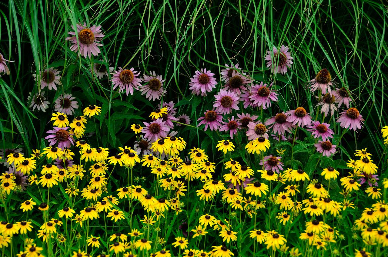 Flowers along roadside