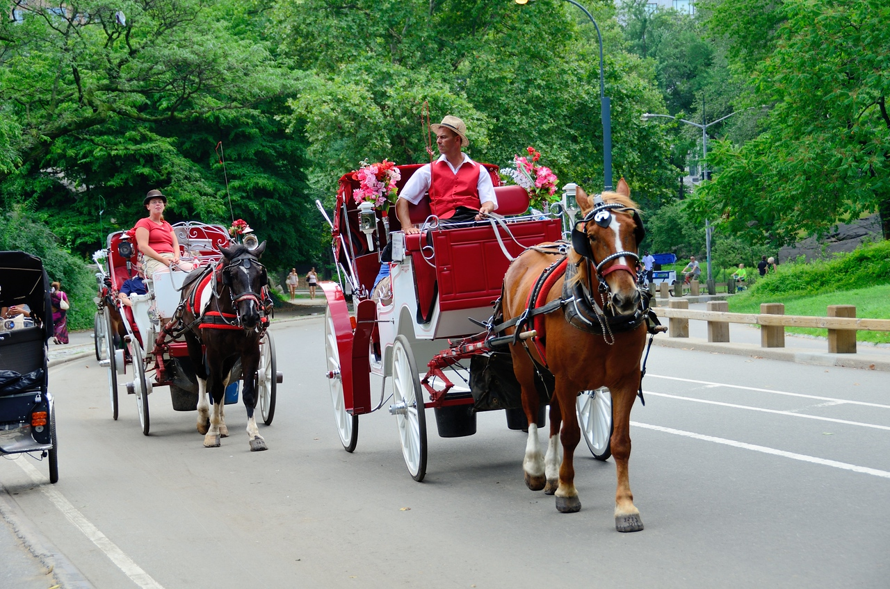 Carriage Rides in Central Park