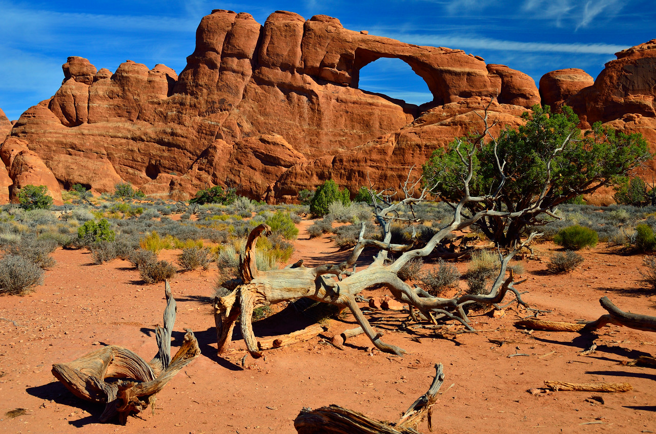 Skyline Arch with weathered tree