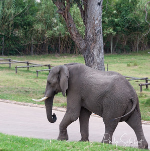 Elephant doing as it is Told.