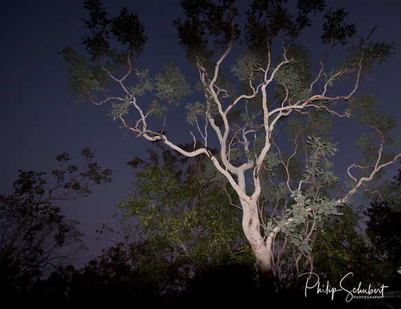 Ghost Gums - Edith Falls