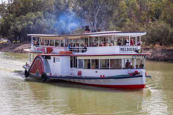 """Mildura, Australia - Sep 20 2018: The historic paddle steamer """"Melbourne"""" is the only steam driven paddle steamer on the Murray River  and now operates popular tourist cruises on the Murray River in New South Wales."""