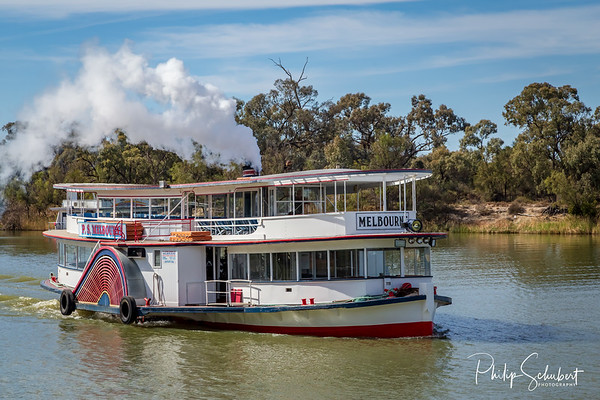"Mildura, Australia - Sep 20 2018: The historic paddle steamer ""Melbourne"" is the only steam driven paddle steamer on the Murray River  and now operates popular tourist cruises on the Murray River in New South Wales."