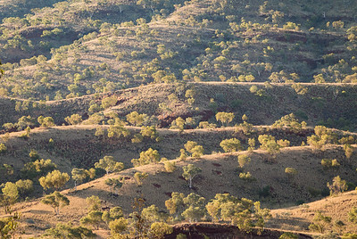 Late afternoon view of Snappy Gums on undulating mountain side, Karijini National Park, Western Australia.