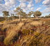 Spinifex Walk