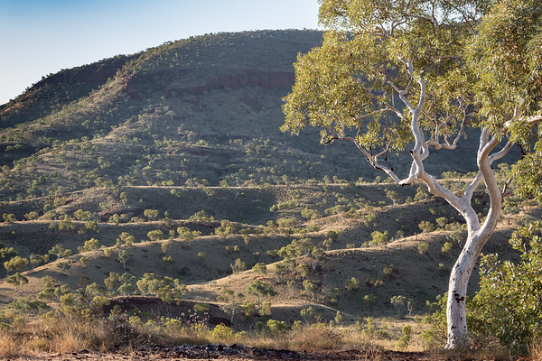 Mountains framed by a white Snappy Gum in the Karijini National Park, Western Australia