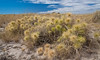 Beach Spinifex