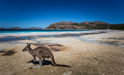 Mmmm, Time for a Swim - Lucky Bay, Esperance, Western Australia